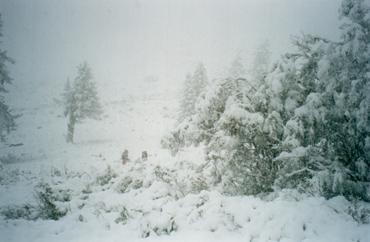 Зима на Алтае. Слияние Ю. Иолдо и Верхнего Курагана.