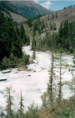 река Кони-Айры. Алтай