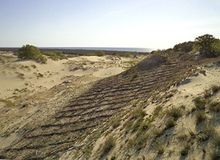 Фашина. Укрепление движущихся песков