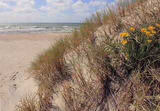 цветущие пески