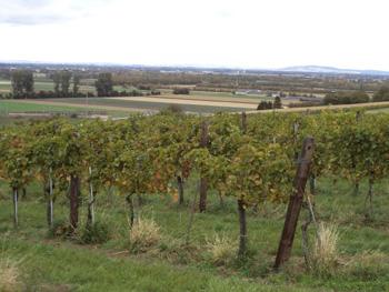 австрия виноградники